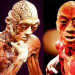 amazing-facts-about-the-human-body