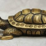 Benefits of keeping turtle in the house